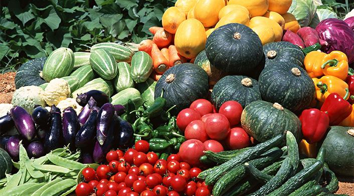 Семена овощных культур от мировых производителей